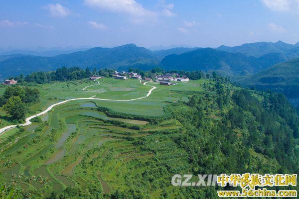 贵州云顶:夏日草原景色美